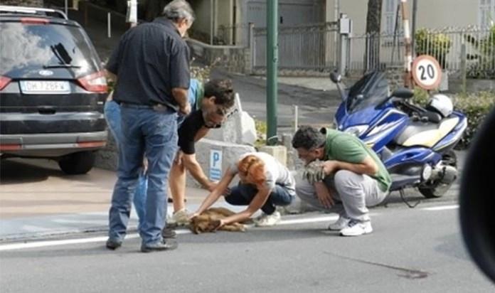 Pirata della strada, investe un cagnolino: indignazione sul web