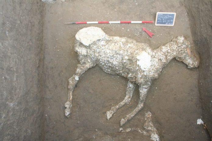 Pompei, meravigliosi ritrovamenti: un cavallo e altri reperti