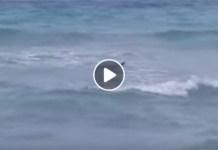 Paura tra i bagnanti: avvistati 3 squali vicini alle rive salentine