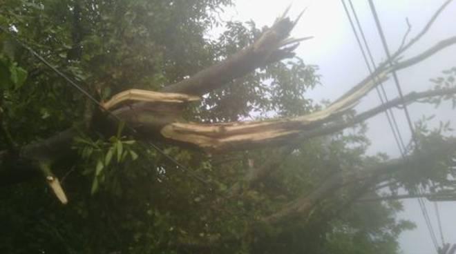 Maltempo, primi incidenti: albero cade sul treno della Circumvesuviana