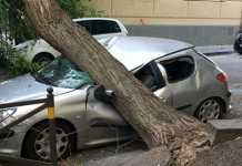 Napoli, vento furioso: albero crolla e distrugge un'auto