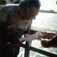 Lo squalo martello