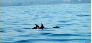 delfini-bagnoli-oceanus