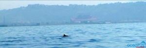 delfini-bagnoli-oceanus01
