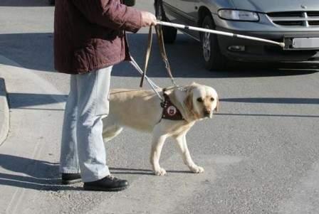 cieco con cane