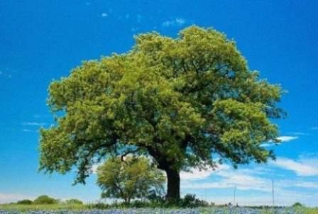 festa albero