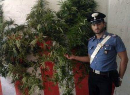sequestro cannabis
