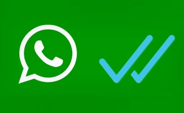 whatsapp-palomas_0_0