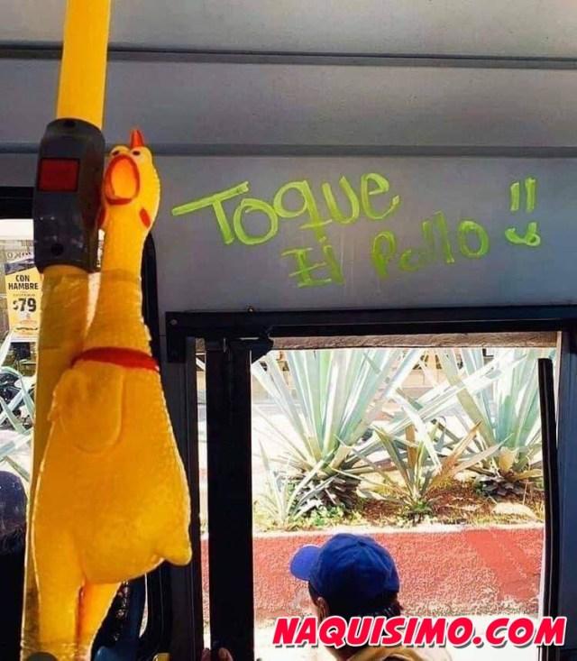 Toque el pollo para bajar transporte publico