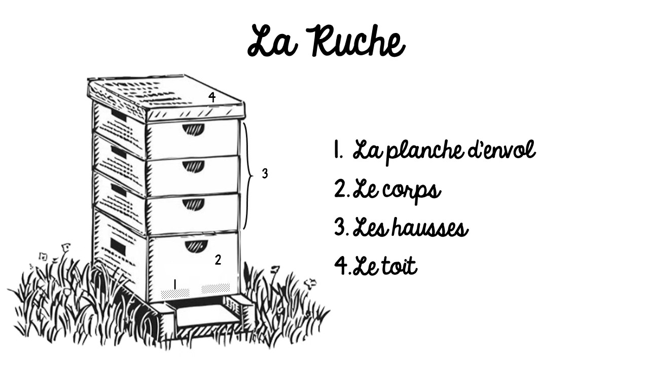 blog agriculture et apiculture la ruche la maison des abeilles. Black Bedroom Furniture Sets. Home Design Ideas
