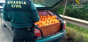 robo-naranjas-01