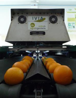 inspeccion-naranjas-y-mandarinas-con-vision-artificial_image_380