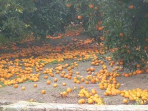 alerta-naranja-lluvia-perdida-campos