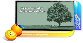 Naranjota138