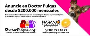 doctorpulgas