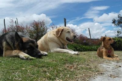 Lola, Paco y Tina, los perros de Carlos Naranjo