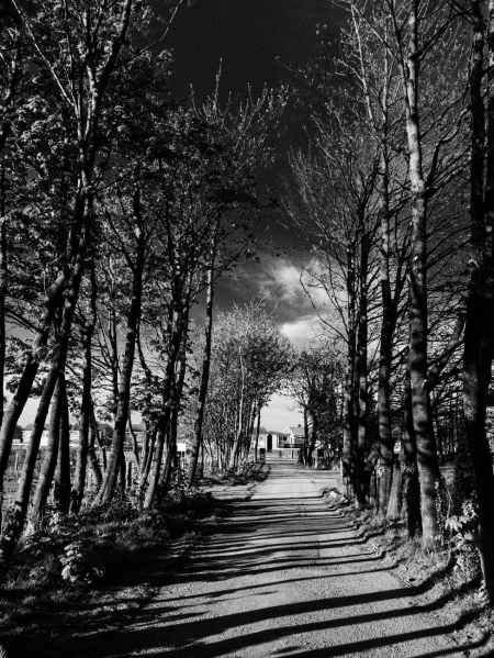 empty walkway with shadows between overgrown trees