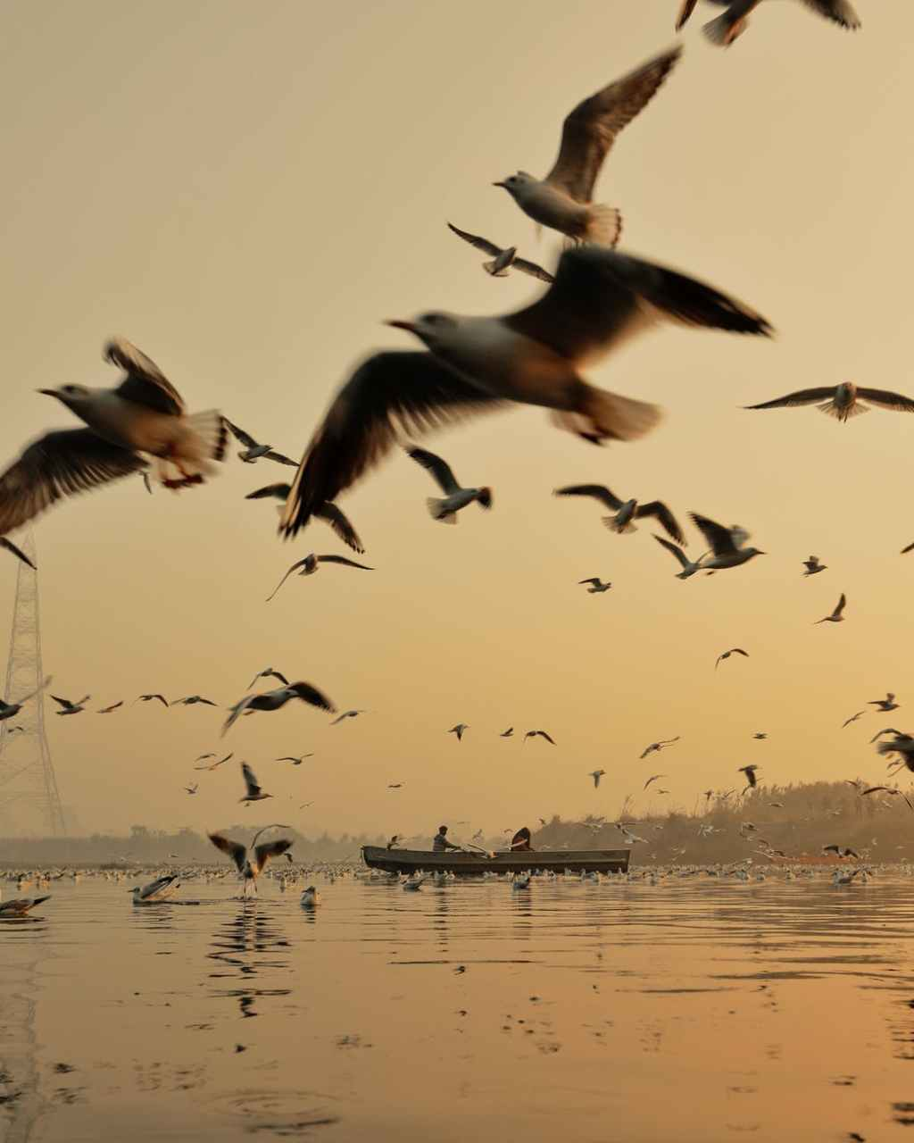 birds flying over sea with boat