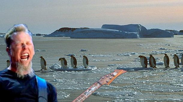 penguenler-ve rock