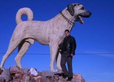 sivas-kangal-heykeli