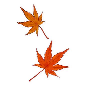 紅葉(もみじ) 秋のイラスト素材 無料テンプレート