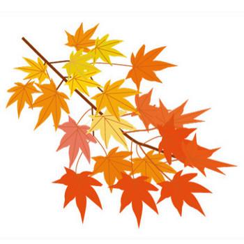 紅葉のイラスト2 | イラスト素材パラダイス 商用利用無料のイラスト素材