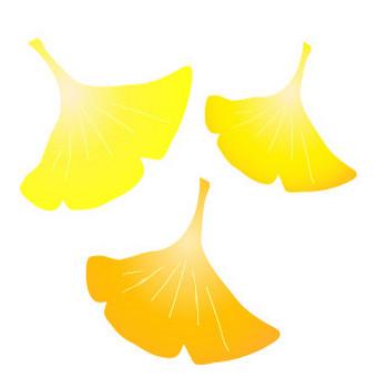 イチョウの葉のフリー素材|WEB・ホームページ素材、イラスト、壁紙、写真が無料でダウンロード