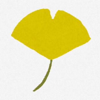 紅葉のイラスト「黄色いイチョウ」 | かわいいフリー素材集 いらすとや