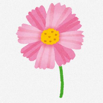 コスモスのイラスト(花) | かわいいフリー素材集 いらすとや
