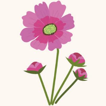 【花】コスモスのイラスト | 商用フリー(無料)のイラスト素材なら「イラストマンション」