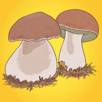 Boletus Mushrooms Graphics Vector Art & Graphics | freevector.com