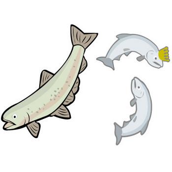 [フリーイラスト] 10種類の鮭のセットでアハ体験 - GAHAG   著作権フリー写真・イラスト素材集