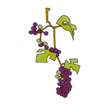 山ブドウのイラスト | かわいいフリー素材が無料のイラストレイン