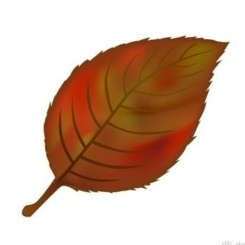 紅葉した落ち葉の無料イラスト素材|iiイラストイメージ