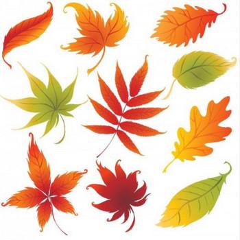秋のイラスト。10種類の紅葉した落ち葉のベクタークリップアート素材 - All Free Clipart +