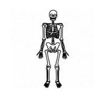 ワード・エクセル・パワーポイントで使える骸骨,スケルトン,ハロウィン,10月,秋のイラスト