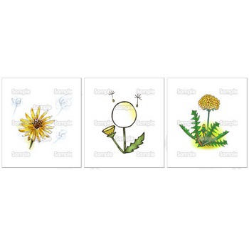タンポポ / ガーベラ / マーガレット / キンセンカ | 花のイラスト素材集 - 花・はな スクウェア