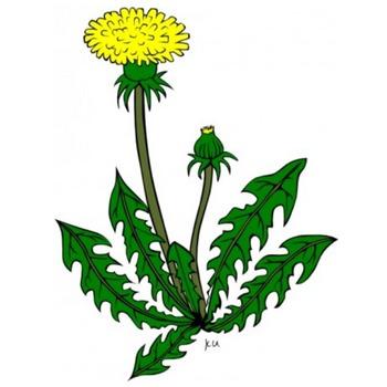 花タンポポ クリップ アート-ベクトル クリップ アート-無料ベクトル 無料でダウンロード
