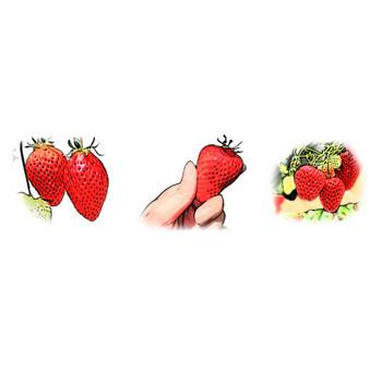 苺(いちご)のイラスト素材フリー
