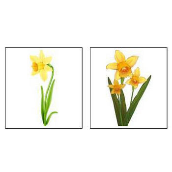 冬のイラスト2「花、植物、動物、食べ物など」/無料のフリー素材集【花鳥風月】