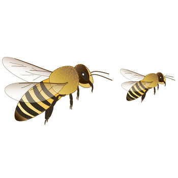 幼稚園児のイラスト・絵カード:ミツバチのイラスト