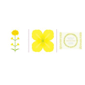 「菜の花」イラスト無料