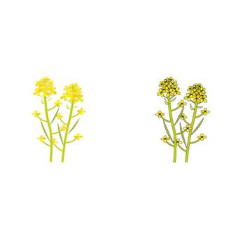 無料素材の『季節・行事素材のイラスト市場』春素材・菜の花のイラスト