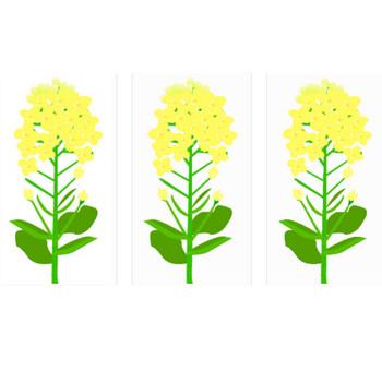 菜の花のイラスト素材 | イラスト素材パラダイス 商用利用無料のイラスト素材