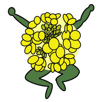 菜の花 : イラスト