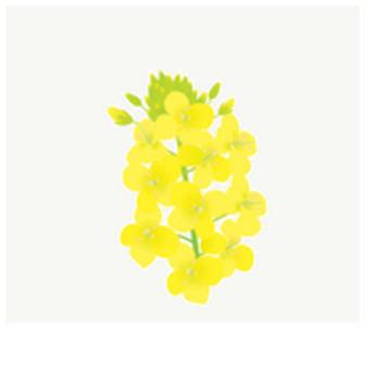 菜の花: 素材庭園(フリーイラスト素材集) ~花・動物・食べ物・人物・雑貨他