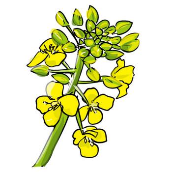 無料イラスト素材「素材絵箱」印刷用素材-春「菜の花」ダウンロード