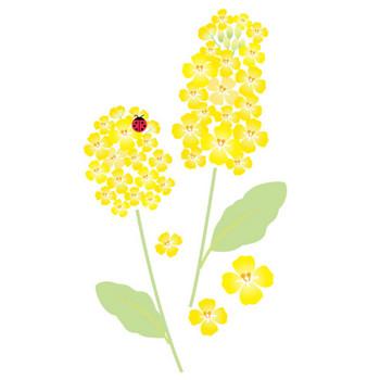 菜の花フリー素材のイラスト・画像集めてみた!