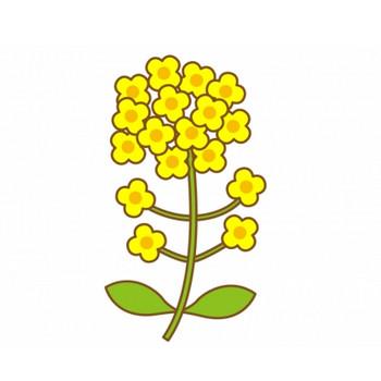 鮮やかな黄色の菜の花のイラスト | イラスト無料・かわいいテンプレート
