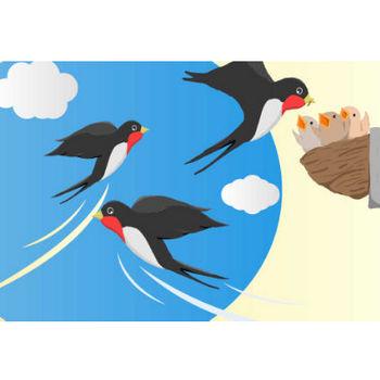 可愛いツバメのイラスト - 巣作りとヒナ・空飛ぶ親鳥 - チコデザ